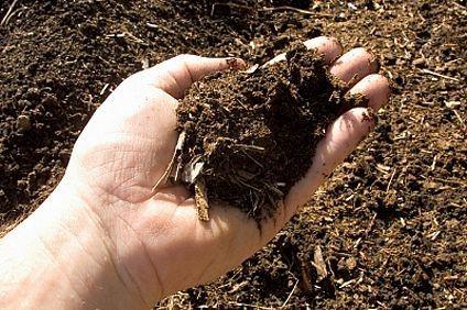 8 conseils pour réussir un compost de qualité