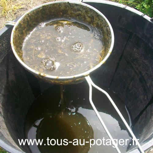 Comment préparer et utiliser un purin d'ortie avec l'étape de filtration
