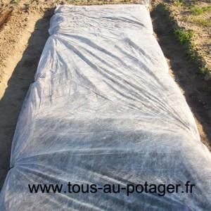culture de la carotte - voile de forçage ancré au sol avec un piquet tous les mètres.