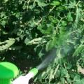 Lutter contre le mildiou : Zoom sur le Bicarbonate de Soude
