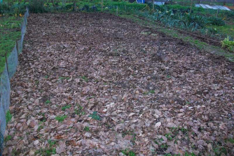 mulch d'automne