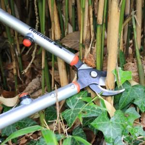 Coupe du bambou très simple avec un ébrancheur