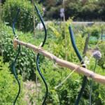 tuteurs spirales liés entre-eux avec une canne de bambou