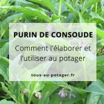 Le purin de consoude – Fabrication & Utilisation