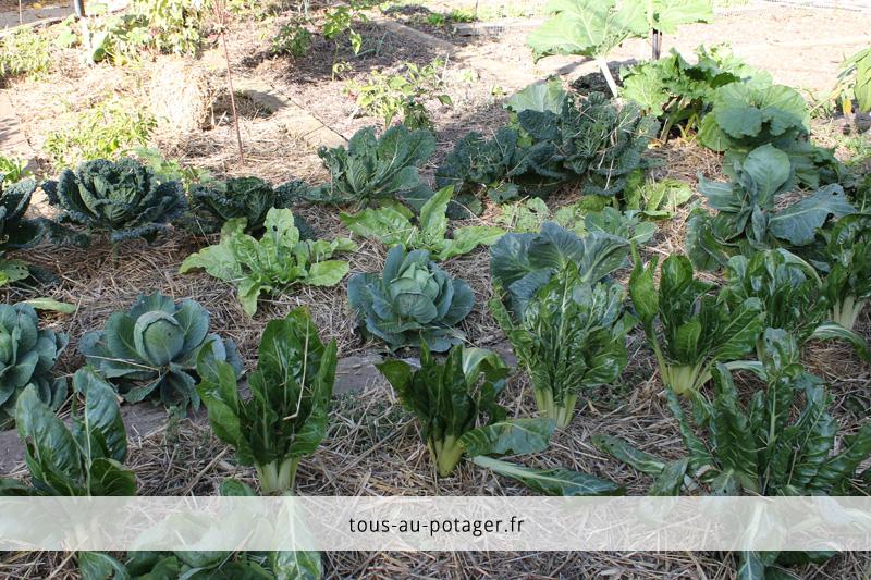 récoltes en octobre au potager : choux, blettes et autres légumes verts à l'honneur