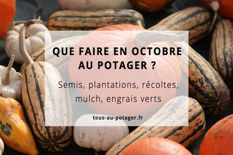 Les travaux du mois d'octobre au potager bio