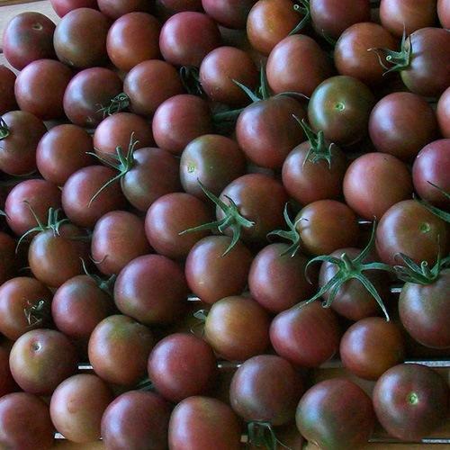 Choisir ses variétés de tomates : Photo de la variété de tomates Brown Berry
