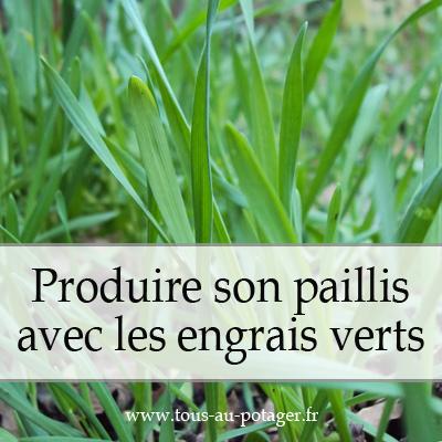 Engrais verts d'automne – Produire du paillis