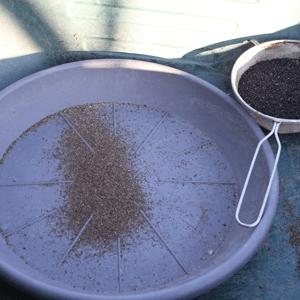 récolter les semences de basilic : éliminer les poussières