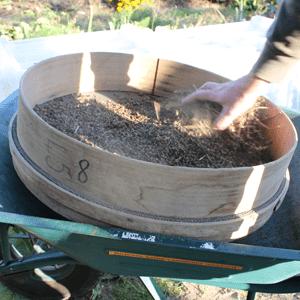 récolter les semences de basilic : premier tamisage