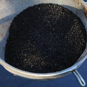 récolter les semences de basilic