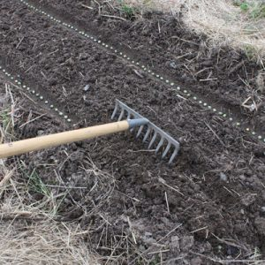 Semer les pois : Recouvrir les pois de 2-3 cm de terre