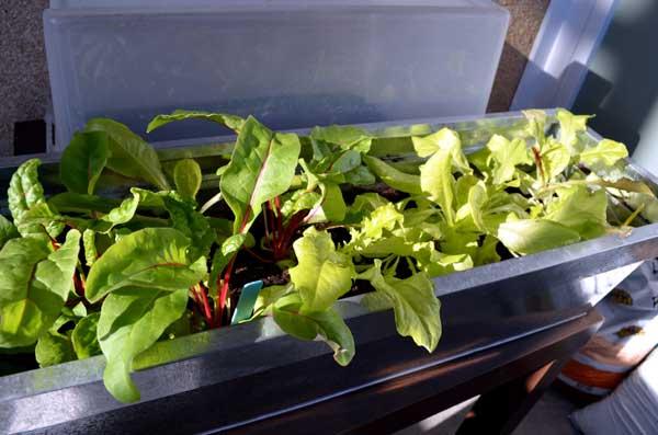Utilisez de grandes jardinières sur votre potager de balcon