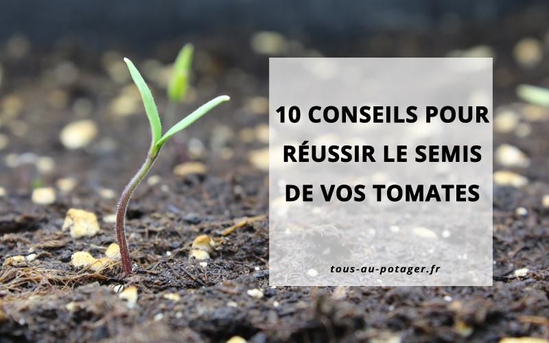 10 conseils pour réussir le semis de vos tomates et obtenir de beaux plants