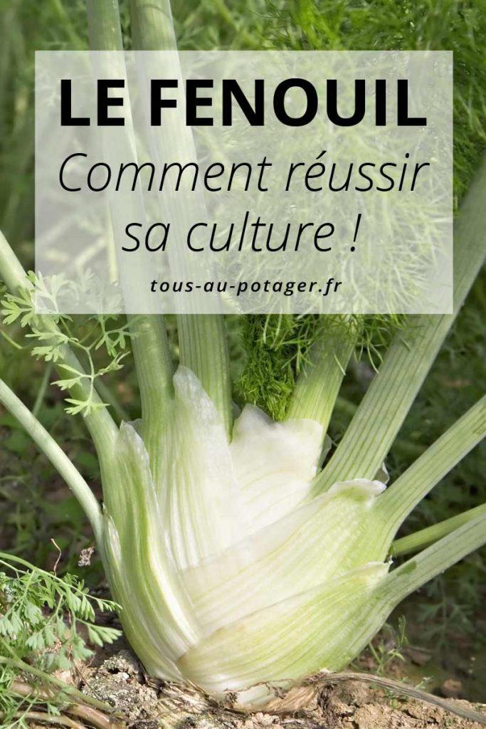 reussir culture du fenouil