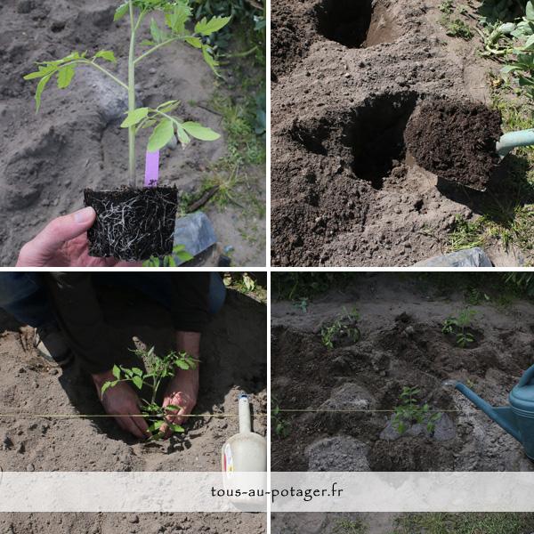 Planter les tomates : Les différentes étapes en photos