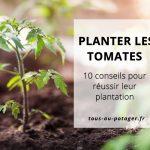 10 conseils pour bien planter ses tomates au potager