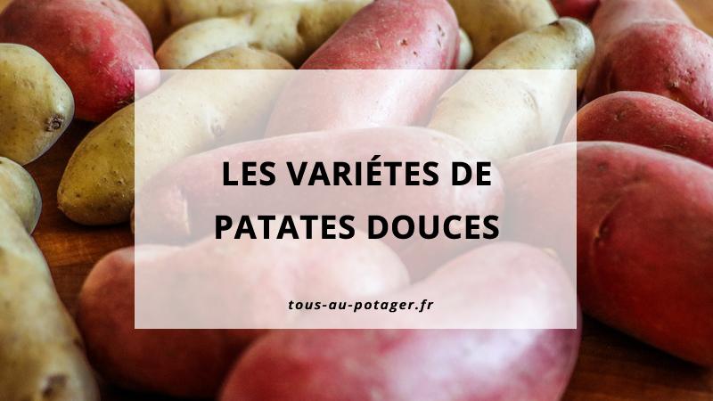 Les différentes variétés de patates douces