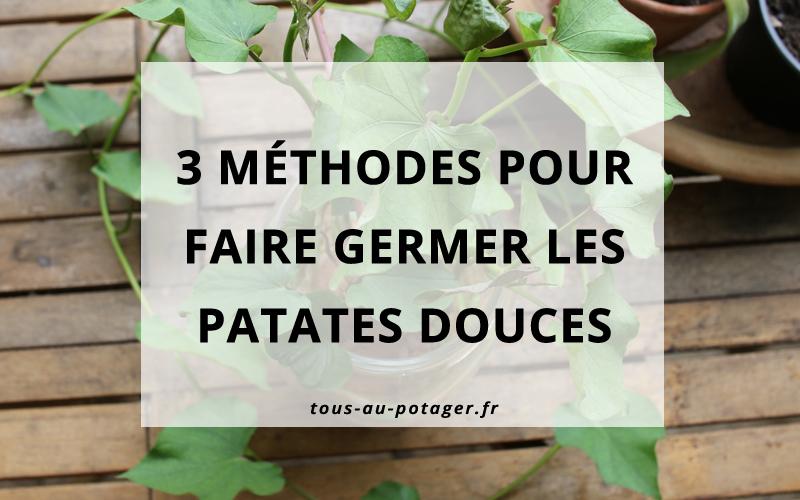 3 méthodes pour faire germer les patates douces