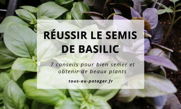 7 conseils pour réussir le semis de basilic