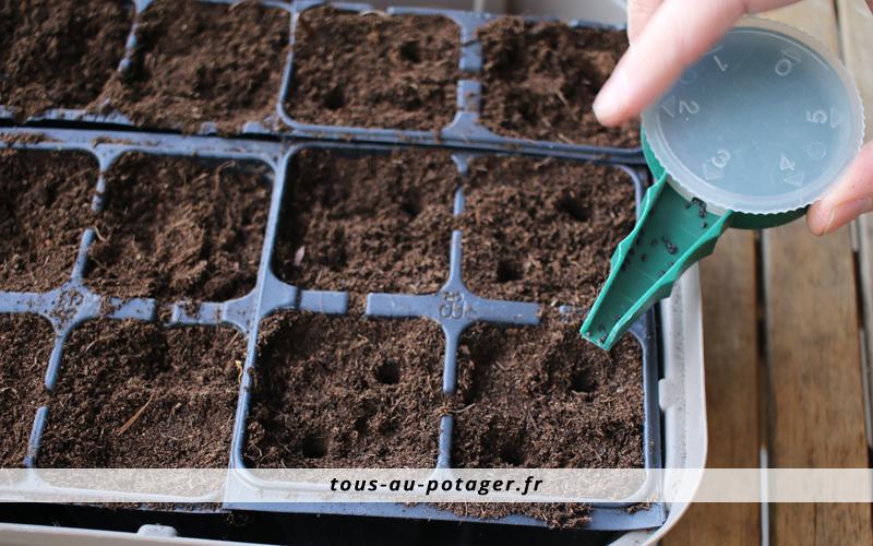 semis de basilic en barquette planpack