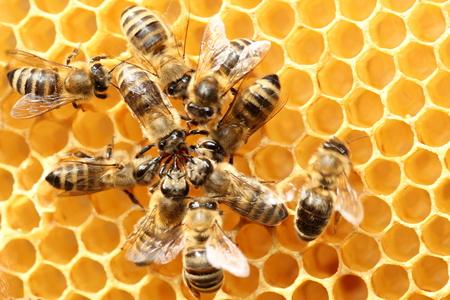 Tout savoir sur l'installation des ruches à domicile