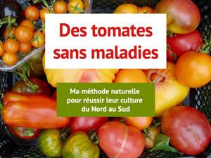 tomates sans maladies