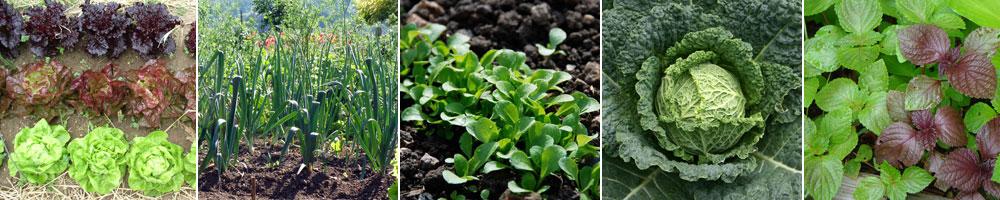 Divers légumes feuilles