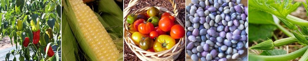 Quelques légumes fruits