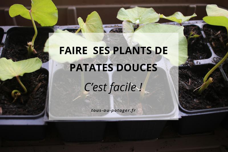 faire ses plants de patates douces