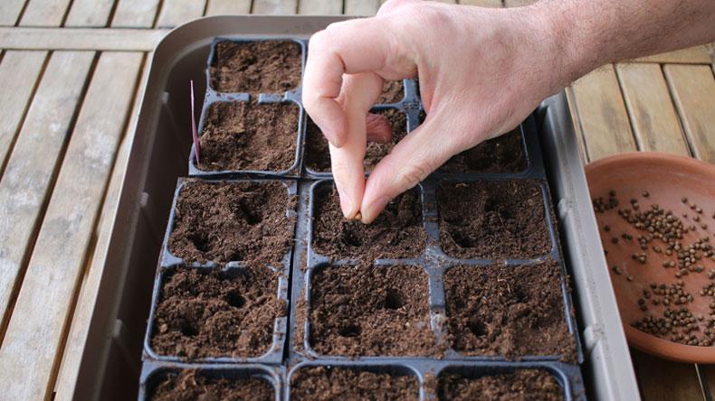 Semer les potagères et les aromatiques