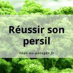 Culture du persil plat et frisé : semer, planter, entretenir, récolter