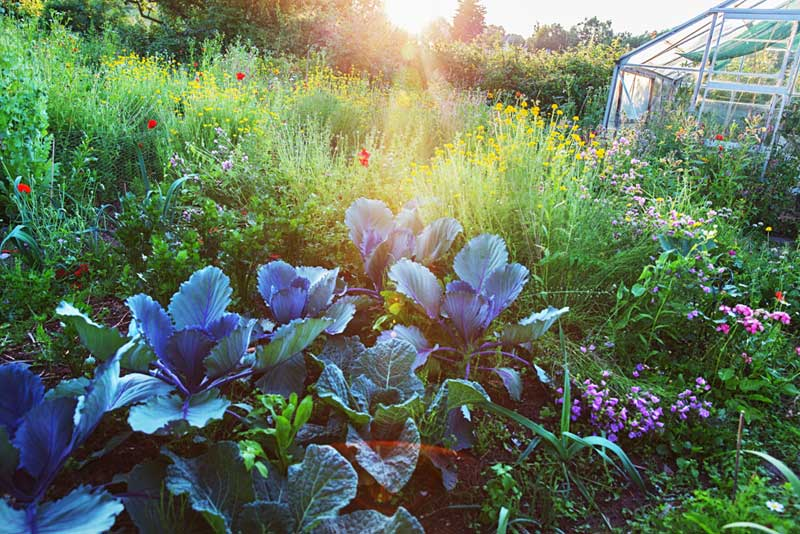 Qu'est ce que la permaculture ? Définition & initiation